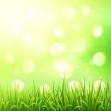 Grünes Gras auf bokeh Lichteffekthintergrund Stockfotos