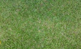 Grünes Gras auf dem Feld lizenzfreie stockfotos