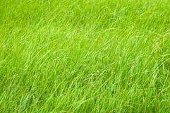 Grünes Gras auf dem Gebiet im Tageslicht Stockfoto