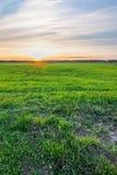 Grünes Gras auf dem Hintergrund des Horizontes mit Sonnenuntergang Lizenzfreie Stockfotografie