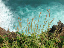 Grünes Gras auf dem hohen Felsen über Meereswellen nähern sich uluwatu Lizenzfreie Stockfotos