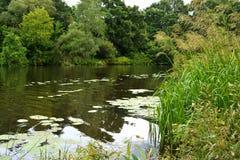 Grünes Gras auf der Flussbank Stockbild