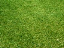 Grünes Gras auf einem Golfplatz Stockbild