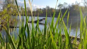 Grünes Gras auf einem Hintergrund des Flusses Stockbilder