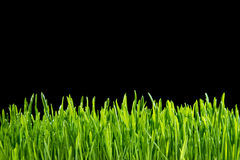Gras auf einem schwarzen Hintergrund stockfotos