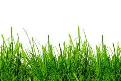 Grünes Gras auf einem weißen Hintergrund Stockfoto
