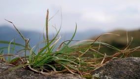 Grünes Gras auf Felsen in einem Berg Stockbild