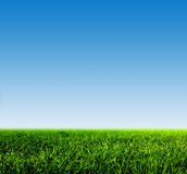 Grünes Gras auf Frühlingsfeld gegen blauen klaren Himmel Stockfotografie