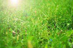 Grünes Gras auf grünem Hintergrund Lizenzfreie Stockfotos
