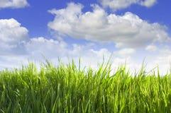 Grünes Gras auf Himmelhintergrund Stockbild