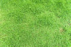 Grünes Gras auf Hintergrund Lizenzfreies Stockbild