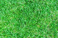 Grünes Gras auf Hintergrund Lizenzfreie Stockfotografie