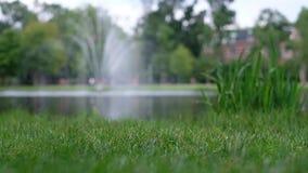 Grünes Gras auf Hintergrund des unscharfen Brunnens stock video footage