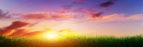 Grünes Gras auf sonnigem Himmel des Sonnenuntergangs Panorama, Fahne Stockfotos
