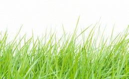 Grünes Gras auf Wandhintergrund lizenzfreies stockfoto