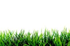 Grünes Gras auf Weiß Lizenzfreie Stockfotos