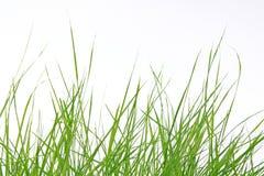 Grünes Gras auf weißem Hintergrund Stockbild