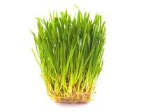 Grünes Gras auf weißem Hintergrund Stockfotos