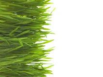 Grünes Gras auf weißem Hintergrund Lizenzfreie Stockbilder
