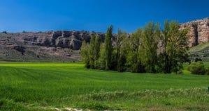Grünes Gras, Bäume und blauer Himmel Stockbilder