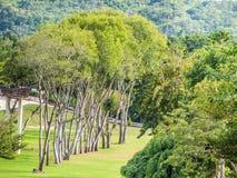 Grünes Gras, Bäume, Wald und Berglandschaft Stockbild