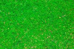 Grünes Gras background1 Stockfotografie