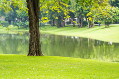 Grünes Gras, Baum, Wasser im Garten Stockfotos