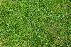 Grünes Gras-Beschaffenheit Lizenzfreie Stockfotografie