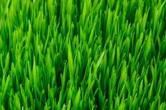 Grünes Gras-Beschaffenheit Lizenzfreie Stockfotos
