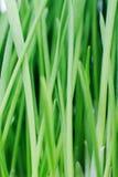 Grünes Gras. Beschaffenheit. Stockfotos