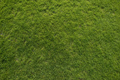 Grünes Gras-Beschaffenheit Stockbild