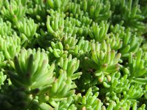 Grünes Gras, Blätter, Garten Stockfotos