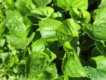 Grünes Gras, Blätter, Sommertag Stockfotografie