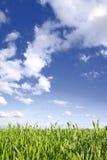 Grünes Gras, blauer Himmel Lizenzfreie Stockfotos