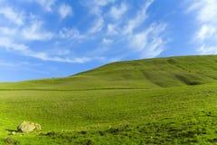 Grünes Gras-blauer Himmel Lizenzfreie Stockfotos
