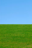 Grünes Gras, blauer Himmel Stockbilder