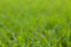 Grünes Gras bokeh Lizenzfreie Stockfotografie