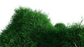 Grünes Gras, das auf Hügeln wächst lizenzfreie stockfotos