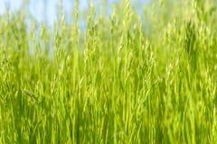 Grünes Gras in der künstlerischen Zusammensetzung lizenzfreies stockbild