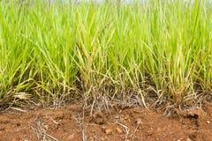 Grünes Gras der Nahaufnahme lizenzfreie stockbilder