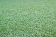Grünes Gras der Natur im Garten Lizenzfreies Stockfoto