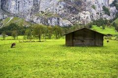 Grünes Gras der Schweiz Stockfotografie