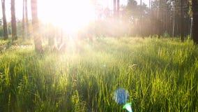 Grünes Gras der Waldsonne stock footage