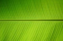 Grünes Gras des Blattes mit Licht der Sonne Stockbild