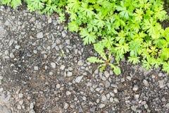 Grünes Gras des Frühlinges entlang der Asphaltpflasterung Lizenzfreies Stockfoto