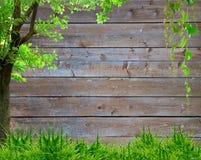 Grünes Gras des Frühlinges und Blattanlage über hölzernem Zaunhintergrund Lizenzfreies Stockbild