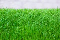 Grünes Gras des frischen Frühlingsrasens Stockbild
