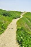 Grünes Gras des historischen Fußwegs Reise Krim Khersones des Museums unter Frühling Lizenzfreie Stockbilder