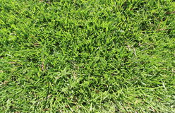 Grünes Gras des neuen Frühlinges Lizenzfreie Stockfotografie