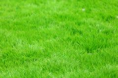 Grünes Gras des neuen Frühlinges lizenzfreies stockfoto
